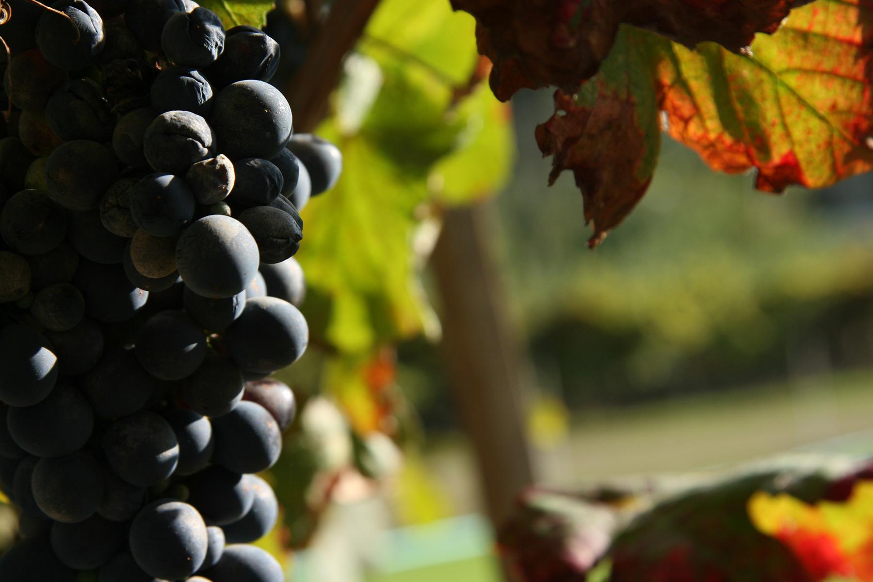 Rota dos Vinhos do Dão